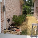 Shade garden - before